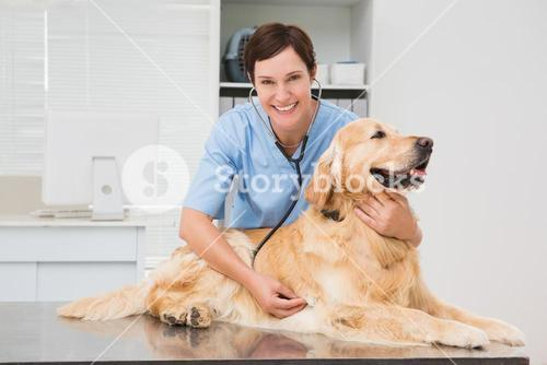 Veterinarian examining a cute dog with a stethoscope