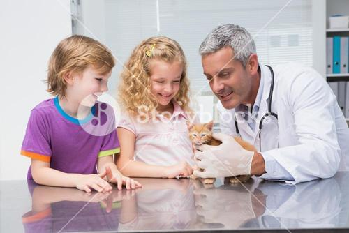 Veterinarian examining a cute cat with its owners