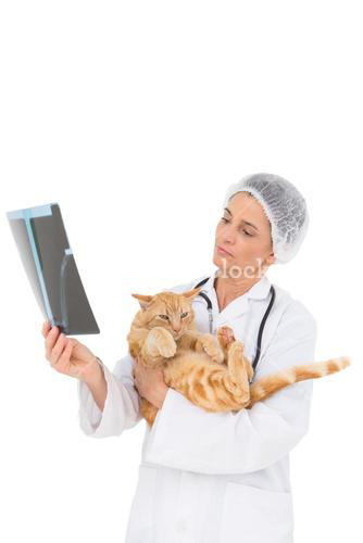 Veterinarian holding cat and looking at xray
