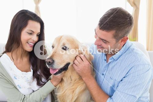 Couple stroking dog at home