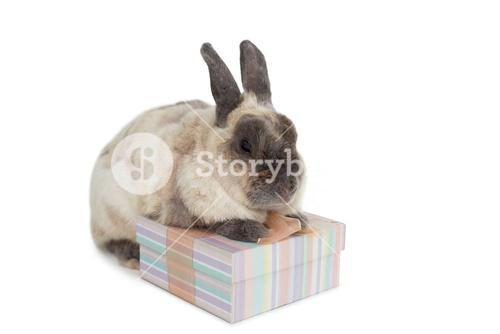 Fluffy bunny with gift box