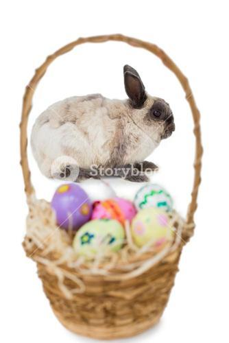 Fluffy bunny with basket of Easter eggs