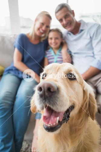 Golden Retriever with happy family at home