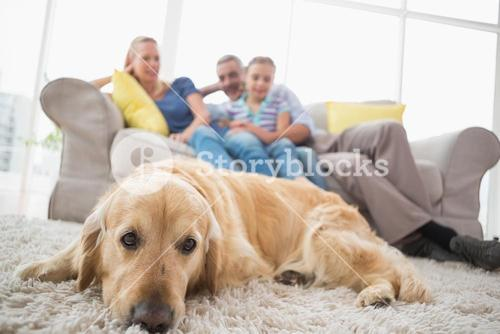 Dog relaxing on rug with family in background