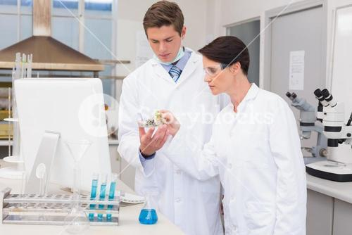 Scientists looking attentively at petri dish