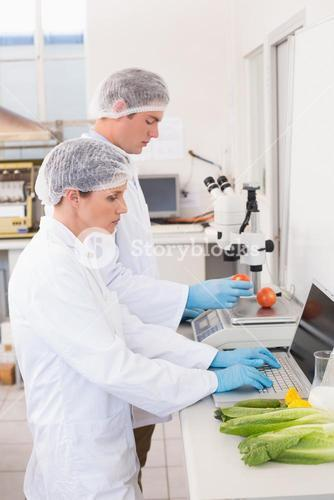 Scientists working attentively with vegetables