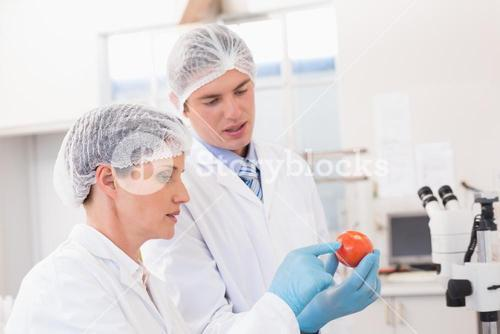 Scientists examining attentively tomato
