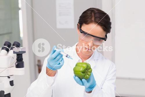 Scientist working attentively with green pepper