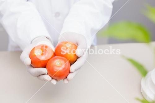 Scientist with protective gloves holding tomatoes