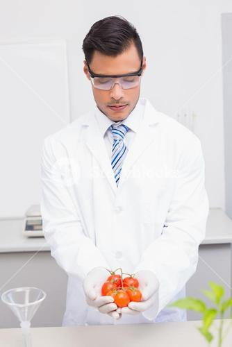 Scientist with protective glasses holding tomatoes