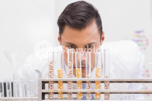 Scientist looking at tubes of corn and kernel