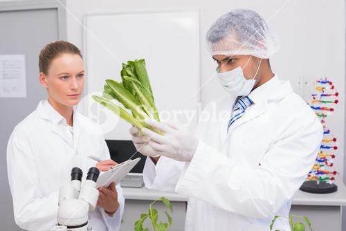 Scientist examining lettuce while colleague writing in clipboard