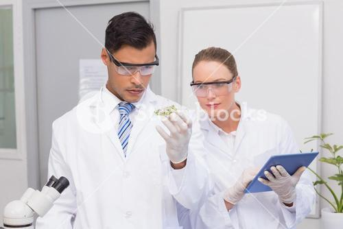 Scientists holding a petri dish with tests of plants
