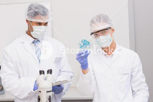 Scientists examining petri dish