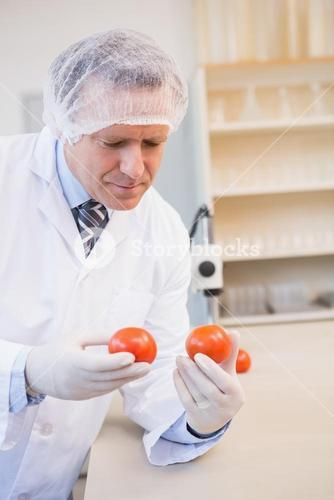 Food scientist looking at red tomato