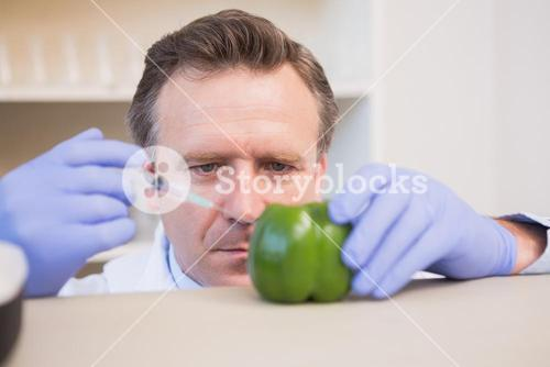 Scientist injecting sweet pepper