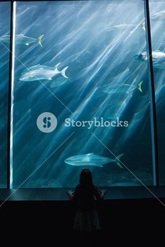 Little girl looking up at fish in tank