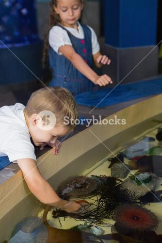 Little siblings looking at fish tank