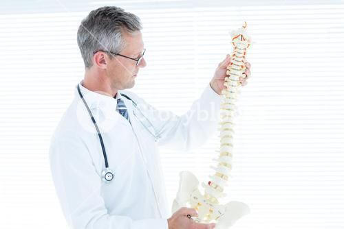 Doctor examining anatomical spine