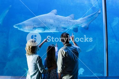 Rear view of family pointing at shark in a tank