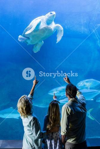 Rear view of family pointing at turtle in a tank