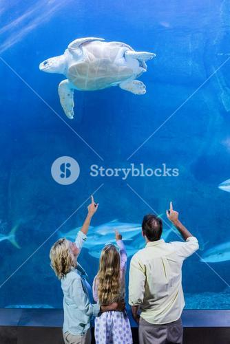Happy family pointing at turtle in a tank