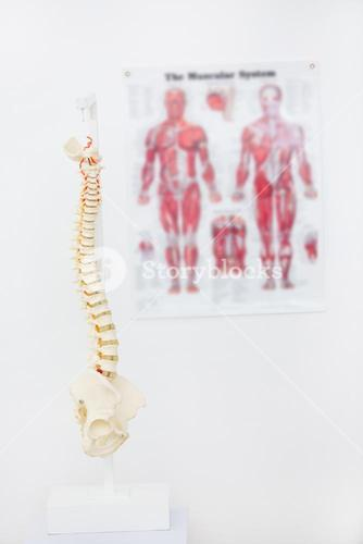 Composite image of anatomical spine