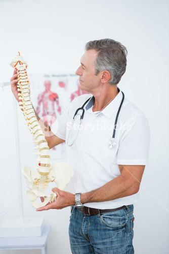 Doctor holding anatomical spine