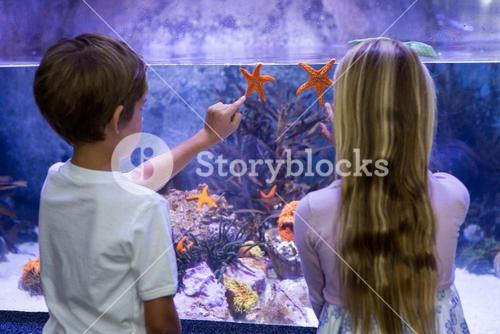 Children pointing at starfish in tank