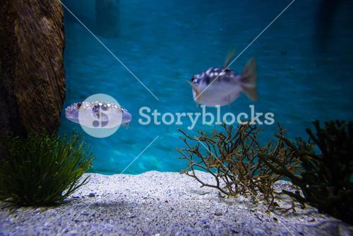 Two fish swimming in a tank