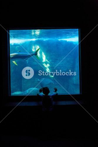 Young man watching fish in a darkest room
