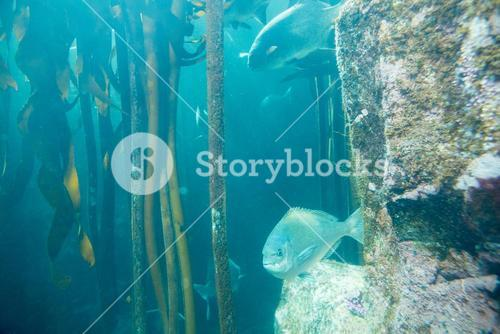 Fish swimming in a tank with algae