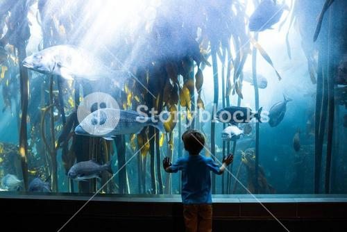 Young man touching a tank with big fish