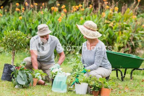 Happy grandmother and grandfather gardening