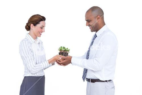 Business colleagues holding plant together