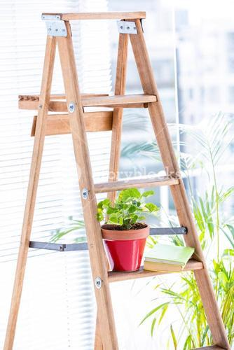 Green plant on wooden ladder