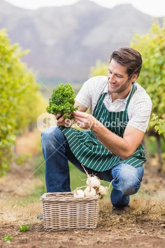 Young happy farmer looking at the vegetable