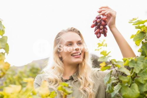 Smiling blonde winegrower holding a red grape