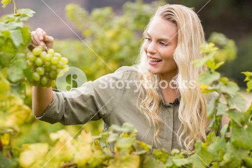 Smiling blonde winegrower holding a grape