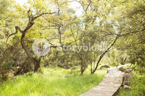 Wooden trail across countryside