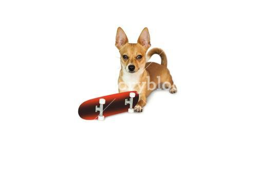 Cute dog chewing on skateboard toy