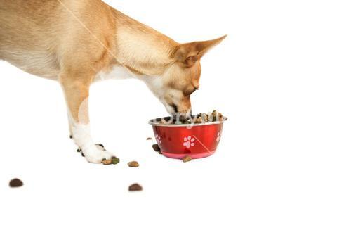 Cute dog eating from bowl
