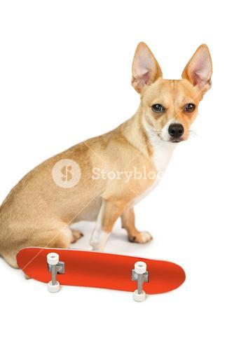 Cute dog with skateboard toy