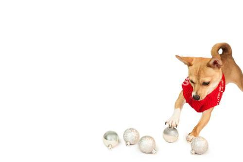 Cute festive dog with baubles