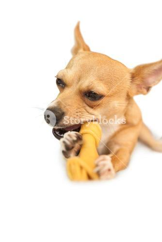 Cute dog chewing bone toy