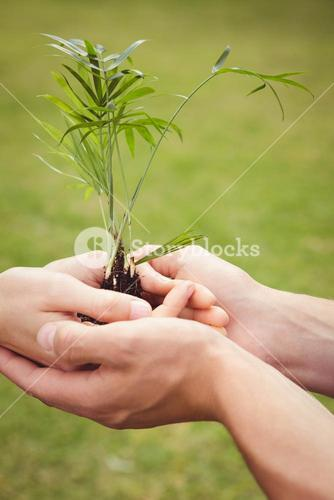 Young couple holding a sapling