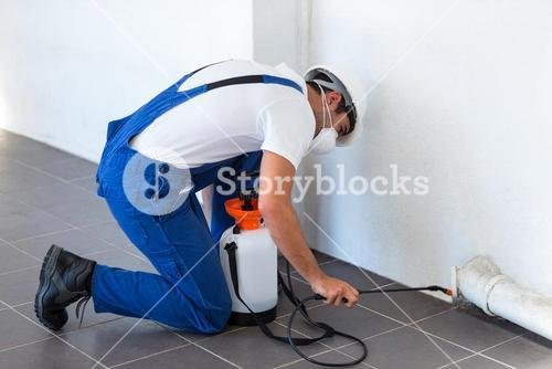 Manual worker spraying insecticide on pipe