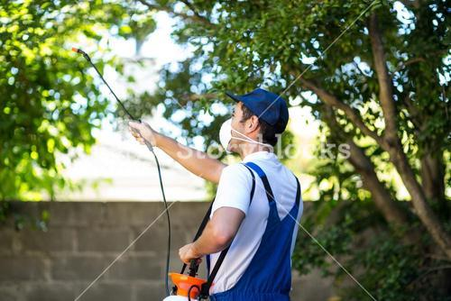 Rear view of pest control worker
