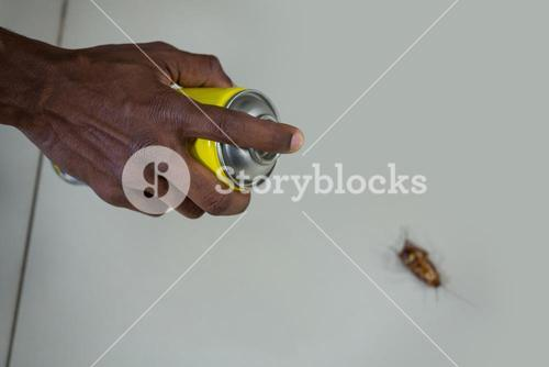 Hand spraying pesticide on a cockroach