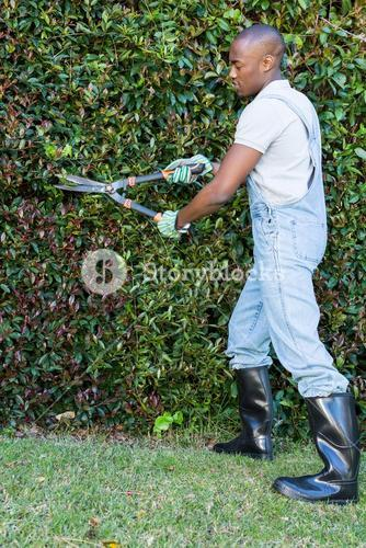 Man cutting hedge with garden scissors